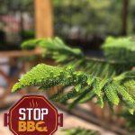 stop-bbq-bonao_logo.jpg